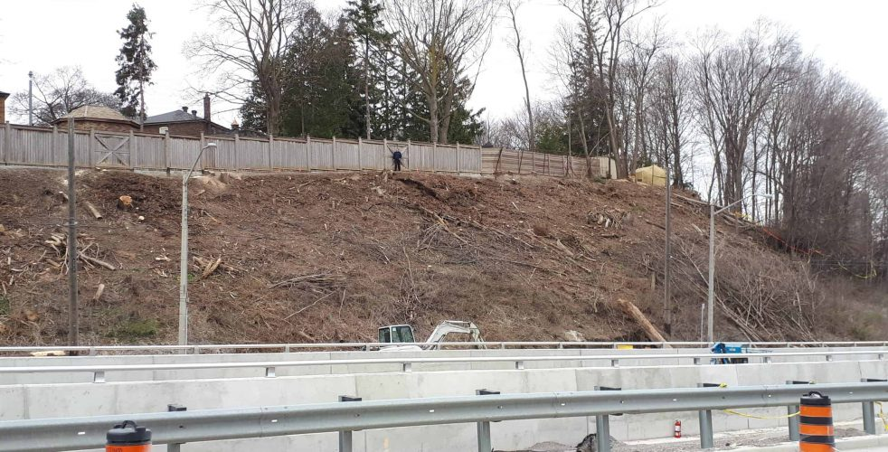 Petition re: Eglinton Tree Restoration